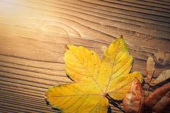 Maple leaf, koelreuteria paniculata leaves, acer seeds on wooden Royalty Free Stock Images