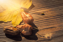Maple leaf, koelreuteria paniculata leaves and acorn on wooden b Royalty Free Stock Photos