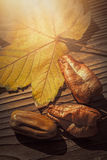 Maple leaf, koelreuteria paniculata leaves and acorn on wooden b Royalty Free Stock Image