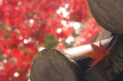 Maple leaf in Kyoto,Japan stock photos