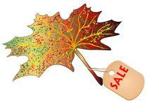 Maple leaf with the label sale Stock Photos