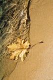 Maple leaf at lake shoreline. Autumn maple leaf on sandy beach at shoreline Stock Image