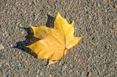 Maple Leaf laying asphalt Royalty Free Stock Photos