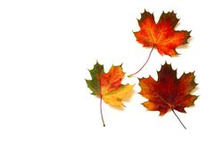 Maple Leaf, Leaf, Orange, Autumn