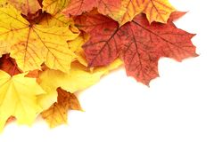 Maple-leaf leaves composition Royalty Free Stock Image