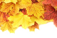 Maple-leaf leaves composition Stock Photos