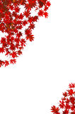 Maple leaf letter background Stock Photography