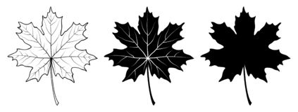 Maple leaf. Linear, silhouette. Vector illustration. Maple leaf. Linear and silhouette isolated on white background. Vector illustration vector illustration