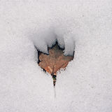 Maple Leaf Melting in Snow stock photography