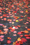 Maple leaf. Mple leaves on the plank road Royalty Free Stock Image