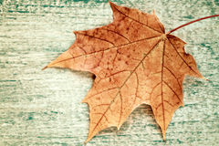 Maple leaf on old wood texture. Stock Photos