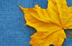 Maple leaf over jeans Stock Image