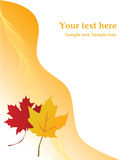 Maple leaf page layout Stock Images
