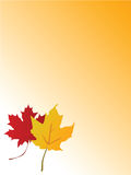 Maple leaf paper Royalty Free Stock Image