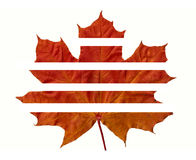 Maple leaf in parts. Yellow autumn maple leaf in parts royalty free stock photography