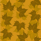 Maple leaf pattern Royalty Free Stock Photography