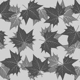 Maple leaf pattern Stock Photo
