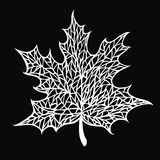 Maple leaf. With a pattern of veins Royalty Free Stock Photography