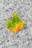 Maple leaf on pavement due to autumn Royalty Free Stock Photography