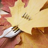 Maple leaf pierced by fork. Royalty Free Stock Photos