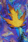 Maple Leaf and Plant Oils Stock Photos