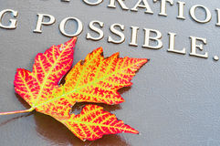 Maple leaf with  Possible word Royalty Free Stock Photography