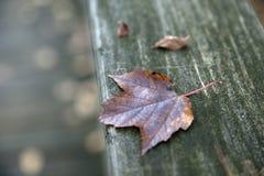 Maple Leaf. On a railing Stock Photos