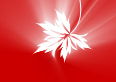 Maple leaf red. A white maple leaf in red ray background Stock Photos