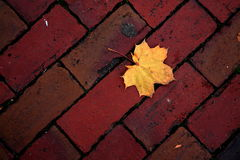 Maple Leaf on Red Bricks. A yellow maple leaf fallen on a red brick sidewalk royalty free stock photos