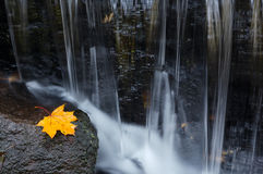 Maple leaf on a rock. Lonely autumn leaf on a stone near the creek Stock Photography