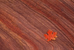 Maple leaf on sandstone Stock Photography