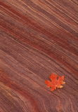 Maple leaf on sandstone Royalty Free Stock Photography