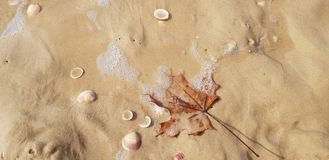 Maple leaf in sea foam stock images
