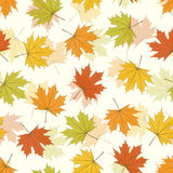 Maple Leaf Seamless Background Royalty Free Stock Photo