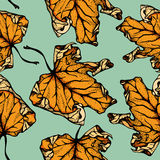 Maple leaf seamless pattern Stock Images