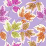 Maple leaf. Seamless pattern texture of flowers. Floral backgrou stock illustration