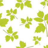 Maple leaf seamless pattern on white Stock Images