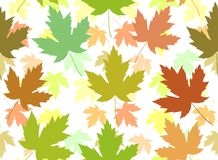 Maple leaf seamless tile Stock Images