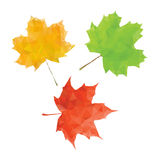 Maple leaf set. Green red and yellow low poly leaf Stock Image