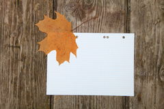 Maple leaf on a sheet of notebook Royalty Free Stock Image