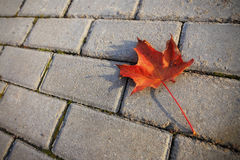 Maple leaf on sidewalk Royalty Free Stock Image