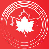 Maple leaf silhouette. Stock Image