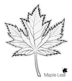 Maple Leaf Silhouette and Outline for your Design Royalty Free Stock Photography