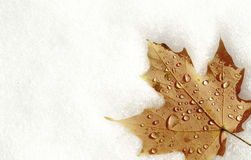 Maple leaf on snow Royalty Free Stock Photos