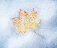 Maple leaf in snow Royalty Free Stock Photography