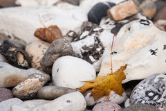 Maple Leaf on stone Royalty Free Stock Photography