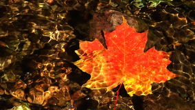 Maple leaf in stream stock footage