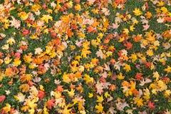 Maple Leaf Texture Stock Photos
