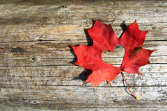 Maple-Leaf to cut the heart. On the tree Royalty Free Stock Image