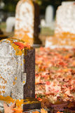 Maple leaf on tombstone in autumn cemetery Stock Images